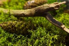 Предпосылка свежего зеленого мха стоковое изображение rf