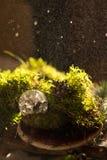 Предпосылка свежего зеленого мха стоковое фото