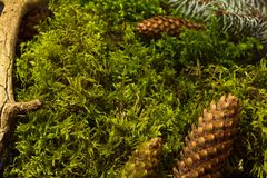 Предпосылка свежего зеленого мха Стоковое фото RF