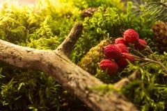 Предпосылка свежего зеленого мха Стоковые Фотографии RF