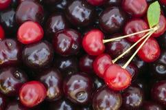 Предпосылка свежих зрелых красных вишен Стоковое фото RF