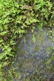 Предпосылка серого камня частично предусматриванная в своде зеленых папоротников Стоковые Фотографии RF