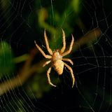 Предпосылка сети паука на ноче Стоковая Фотография