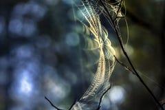 Предпосылка сети расплывчатая красочная Стоковое фото RF