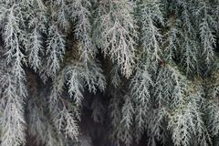 Предпосылка символа рождества ветвей сосны Стоковые Фото