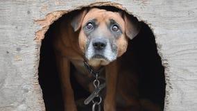 Предпосылка собаки предохранителя Стоковые Изображения