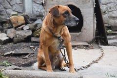 Предпосылка собаки предохранителя Стоковая Фотография