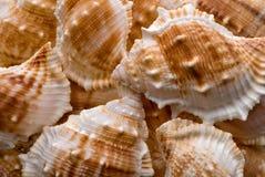 Предпосылка собрания Seashells Стоковые Фотографии RF