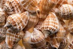 Предпосылка собрания Seashells Стоковое фото RF