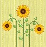 Предпосылка солнцецвета иллюстрация штока