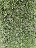 Предпосылка ствола дерева и mos стоковая фотография rf