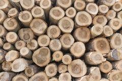 Предпосылка стволов дерева в лесе Стоковые Изображения