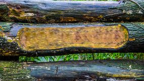 Предпосылка стволов дерева с одним высекаенным стволом, пустым пространством для установки вашей доски знака текста, леса или сад стоковые фото