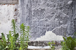 Предпосылка стены Стоковое Фото