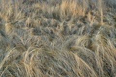 Предпосылка сухой травы и засорителей стоковое фото rf