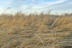 Предпосылка сухой травы и засорителей стоковые изображения rf