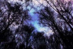 Предпосылка сюрреалистических деревьев осени атмосферическая стоковая фотография