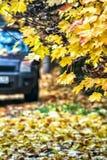 Предпосылка с желтыми листьями, автомобиль осени Стоковое Изображение
