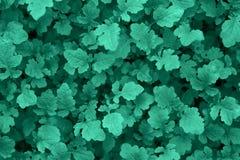 Предпосылка с зелеными растениями Стоковые Фотографии RF