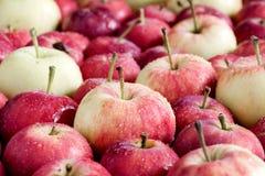 Предпосылка с концом предпосылки сбора яблок малой предпосылки яблок деревянной красивым малым вверх Стоковое Изображение RF