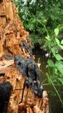 Предпосылка с коричневыми и серыми тенями старого хобота дерева которое было повреждено огнем и новыми заводами стоковые изображения rf