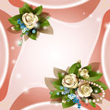 Предпосылка с красивейшими белыми розами Стоковые Фотографии RF