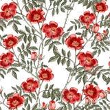 Предпосылка с красной розой картина безшовная Стоковое фото RF