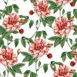 Предпосылка с красной розой картина безшовная Стоковое Изображение