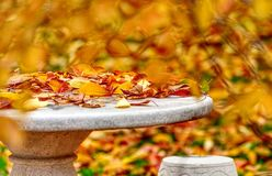 Предпосылка с красочными упаденными листьями, природа природы осени падения стоковое изображение