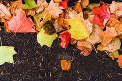 Предпосылка с листьями осени клена в парке осени Внешнее autu Стоковая Фотография