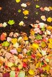 Предпосылка с листьями осени клена в парке осени Внешнее autu Стоковые Изображения