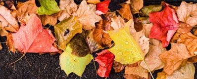 Предпосылка с листьями осени клена в парке осени Внешнее autu Стоковое Изображение