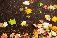 Предпосылка с листьями осени клена в парке осени Внешнее autu Стоковое Изображение RF
