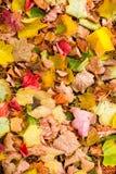 Предпосылка с листьями осени клена в парке осени Внешнее autu Стоковые Фото