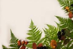 Предпосылка с листьями папоротника на белизне стоковое изображение