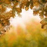 Предпосылка с оранжевыми листьями дуба, искра осени Bokeh Стоковые Изображения