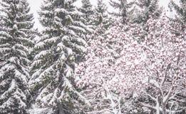 Предпосылка с покрытой снег золой горы стоковое фото rf