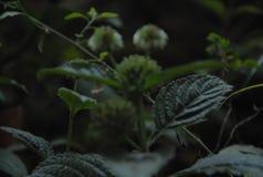 Предпосылка с природой стиля цветка Стоковые Изображения RF