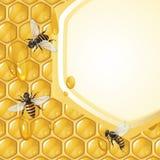 Предпосылка с пчелами Стоковая Фотография