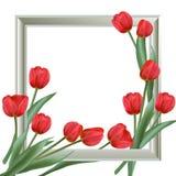 Предпосылка с рамкой и реалистическими тюльпанами Стоковое Изображение RF