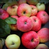 Предпосылка с свежими красными яблоками Взгляд сверху Стоковое Фото