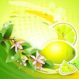 Предпосылка с свежим лимоном Стоковое Изображение RF