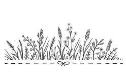 Предпосылка с травами и цветками нарисованными рукой Стоковые Изображения