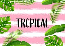 Предпосылка с тропическими листьями ладони Экзотические тропические заводы Иллюстрация природы джунглей Стоковое Изображение
