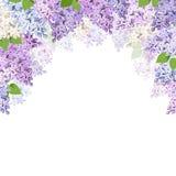 Предпосылка с цветками сирени также вектор иллюстрации притяжки corel Стоковое Изображение
