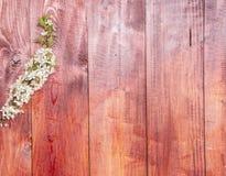 Предпосылка с цветя ветвями весны слив Стоковые Изображения