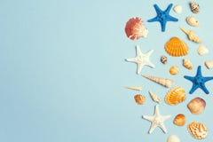 Предпосылка с seashells и граница морских звёзд на сини Место для стоковое изображение rf