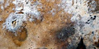 Предпосылка текстуры гриба лесного дерева Стоковое Изображение