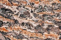 Предпосылка текстуры дерева со множественными цветами стоковые изображения