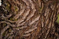 Предпосылка текстуры дерева HD Стоковое Изображение RF